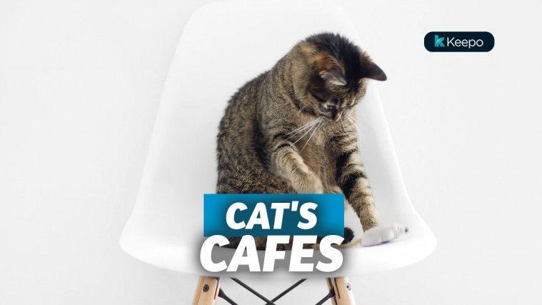 Super Gemas, Ini List 8 Kafe Kucing yang Populer di Indonesia
