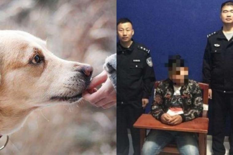 Seorang Pria di China Ditahan Gara-gara Memberi Nama Ilegal Kepada 2 Anjingnya