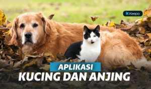 5 Aplikasi Kucing dan Anjing di Android Terbaik