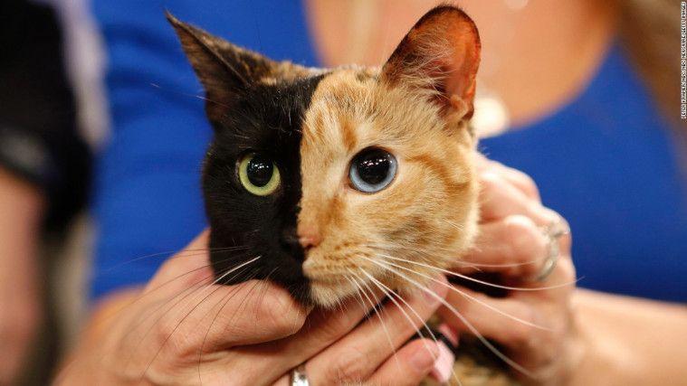 Remaja Ini Alami Skizofrenia Gara-Gara Kucingnya