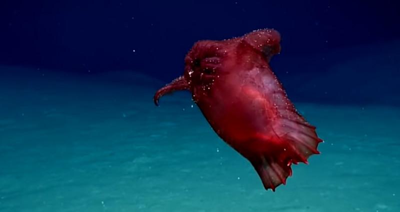 Merinding! Video Penampakan Monster Laut Ayam Tanpa Kepala