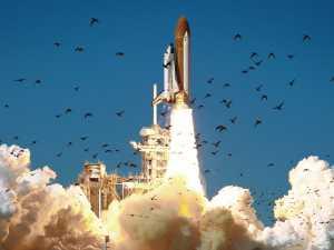 Roket SpaceX Bisa Terbakar Gara-gara Kotoran Burung