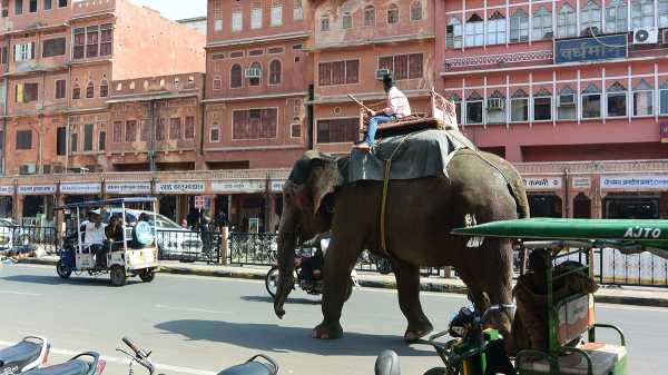 Yang Unik di Kota Jaipur, India: Gajah hingga Onta Berbaur di Jalanan