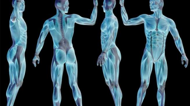 50 Persen Lebih Tubuh Manusia adalah Koloni Mikroskopis