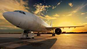 Gara-gara Penyu Nyasar, Penerbangan Ini Terpaksa Ditunda