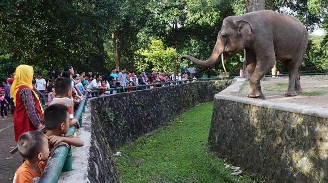 Pengalaman Unik, Ngabuburit Bersama Gajah