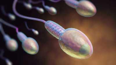 Riset: Polusi Bunuh 75 Persen Sperma