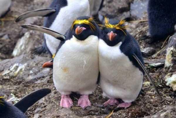 Penguin Bisa Indikasikan Perubahan di Kutub Selatan