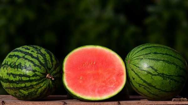 5 Tips Memilih Semangka yang Manis dan Matang Sempurna