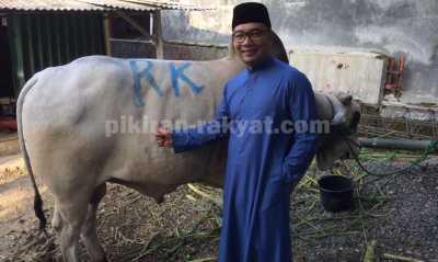 Gagal Beri Nama Syahrini, Ridwan Kamil Namai Sapi Kurban Miliknya Syahrono