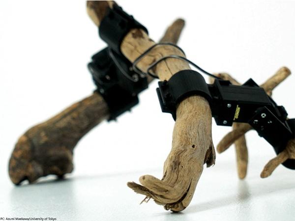 Unik! Peneliti Jepang Ciptakan Robot dari Ranting Pohon
