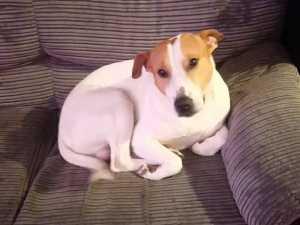 Anjing Ini Terpaksa Dioperasi karena Telan Kaset Nintendo