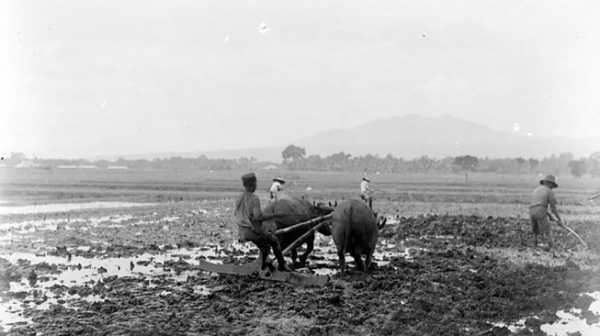 Sejarah Sawah di Zaman Kolonial