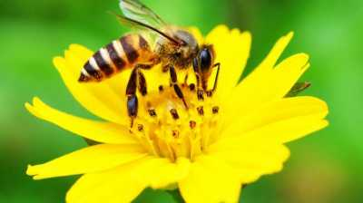 Robot Lebah Ini Bisa Bantu Penyerbukan