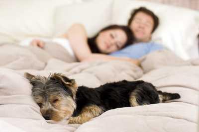 3 Faktor Penyebab yang Membuat Anda Berisiko Kena Penyakit Lyme