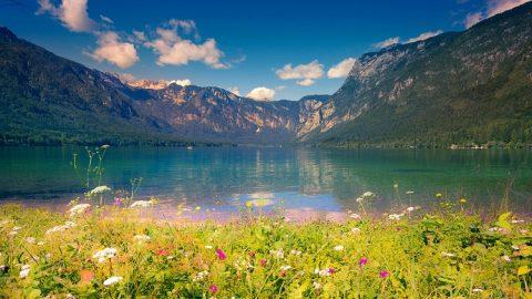 Panorama Mengagumkan Bunga