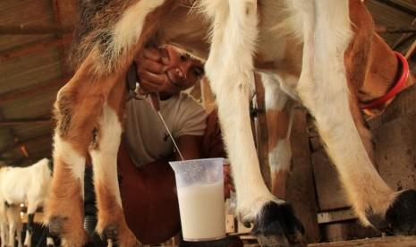 Manfaat Susu Kambing untuk Kosmetik
