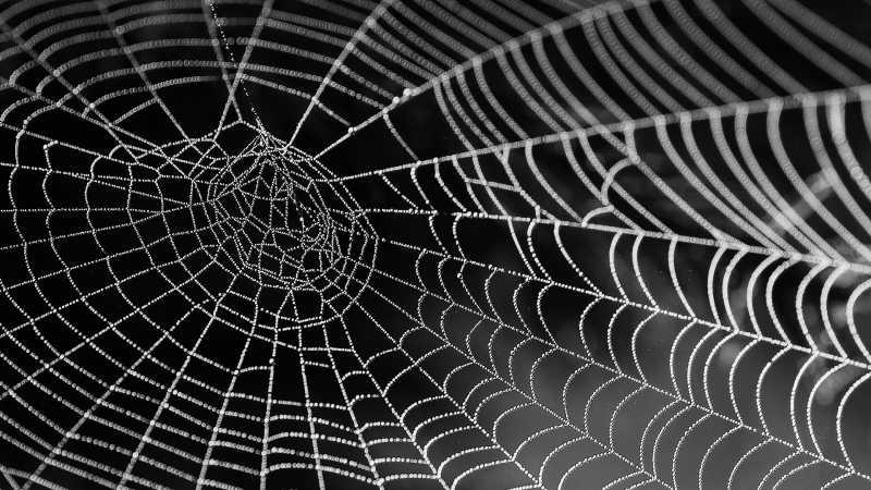 Jaring Laba-laba Black Widow Bisa Dipakai untuk Bangun Jembatan