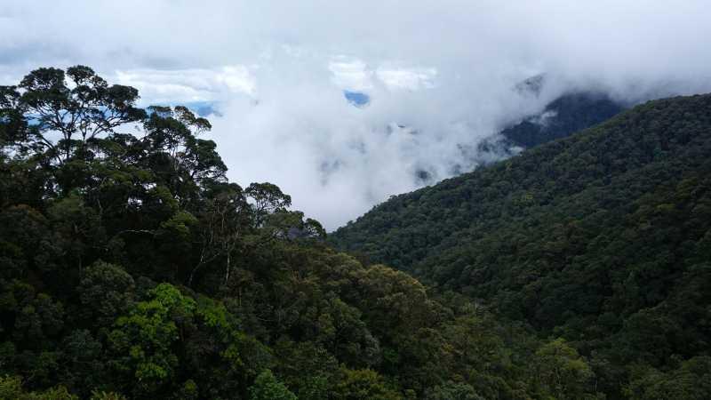 Menilik Jejak Masa Depan Harimau Sumatera di Hutan Aceh